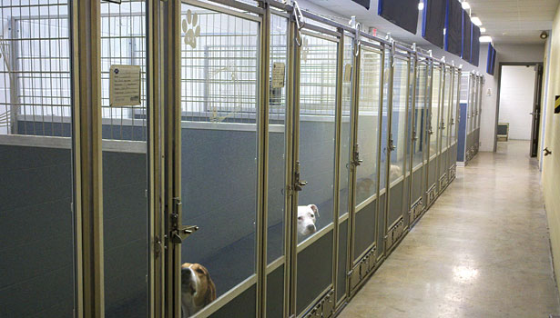 Animal Shelter Buildings In 2009, the humane society of
