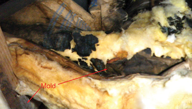 Mold in Ductwork 1