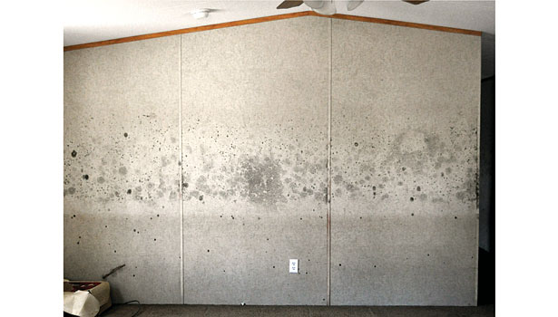 Potential health effects and symptoms associated with mold exposures include allergic reactions, asthma, and other respiratory complaints. (Courtesy, FEMA)