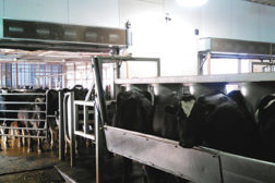 Dairy farmer Hans Griesen was losing product and productivity due to freezing wintertime temperatures at his Madison, Wisconsin, milking parlor until he installed two air curtains.