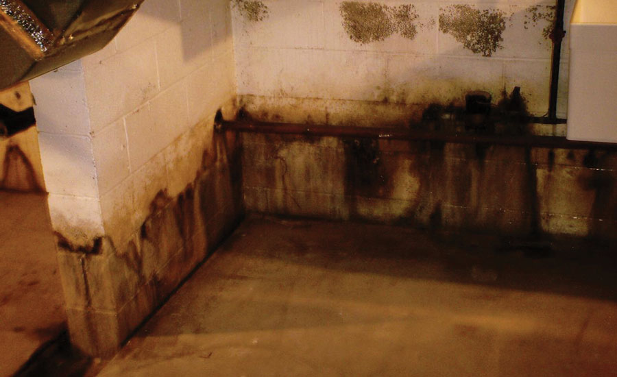 Mold accumulated along the floor of this basement before mold remediation specialists addressed the issue.