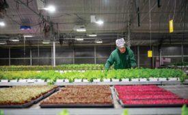 Anden-Indoor-Farming-ACHR-News.jpg