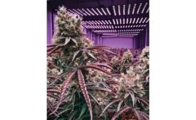 Cannabis-Facility-HVAC-Projects-01.jpg